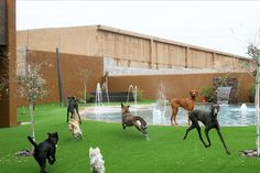 Always Unleashed Pet Resort has a doggy lagoon…it's pawesome! , Always Unleashed Pet Resort has a doggy lagoon…it's pawesome! , Always Unleashed Pet Resort has a doggy lagoon…it's pawesome! Dog Boarding Kennels, Pet Boarding, Animal Boarding, Shelter Dogs, Animal Shelter, Indoor Dog Park, Luxury Dog Kennels, Dog Kennel Cover, Pet Hotel