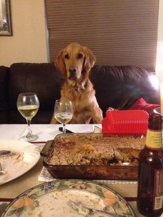 10 Dogs Who Are Pretty Sure They're People - The Dodo