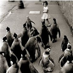 Weird and Funny Retro Photos pics) Weird and Funny Retro Photos. Part 2 pics) Some of them just dont make any sense. Weird and Funny Retro Pho Black White Photos, Black And White Photography, Penguin Love, Penguin Parade, Funny Penguin, Vintage Penguin, Penguin Art, Retro Pictures, Retro Pics