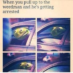 kermit the frog meme - Google Search