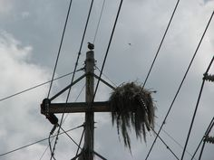 Nest material can pose a fire hazard when it makes contact with energized equipment. OspreyWatch nest 382.