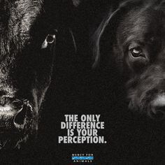 #bestofvegan #veganfoodporn #dairyfree #veganshare #whatveganseat #veganpower #peta #veganfortheanimals #animalrescue #vegetarian #vegangirl #plantpower #instavegan #vegano #animalrights 💯
