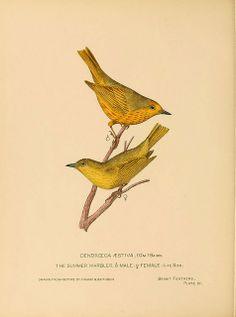 Bright feathers, Auburn, N.Y. 1880 - 82