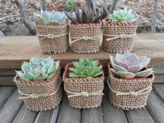 Reserved For Dan 180 Succulents For A Wedding by SucculentsGalore