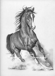 pencil drawings of horses horse pencil drawings horses - horse sketch art Horse Pencil Drawing, Pencil Drawings Of Animals, Horse Drawings, Art Drawings Sketches, Sketch Art, Horse Sketch, Equine Art, Pretty Horses, Horse Art