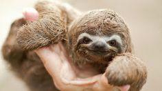 cute-baby-sloth.jpg (320×180)