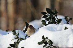 """#WinterinCT"" "" #CenterofCT""..... Winter in Ct photo Contest.    Bird in the snow"