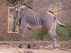 zebra enrichment images   Animal Enrichment Wish List - National Zoo  FONZ