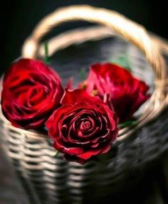 love roses are red Beautiful Flower Quotes, Beautiful Flowers Wallpapers, Beautiful Rose Flowers, Exotic Flowers, Flower Iphone Wallpaper, Flower Wallpaper, Roses For Her, Summer Flower Arrangements, Red Rose Bouquet