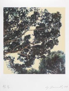 "jimlovesart: "" Cy Twombly - Tree (I) (Capri), 1986. """