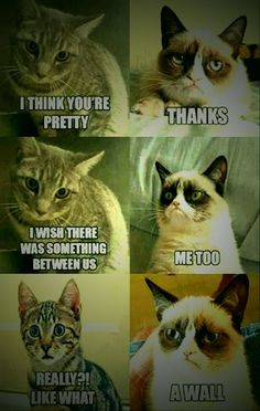 grumpy cat  - Radioactive - #Cat #grumpy #Radioactive - grumpy cat  - Radioactive Love Memes Funny, Christmas Games For Kids, Grumpy Cat, Thankful, Cats, Animals, Gatos, Animales, Kitty Cats