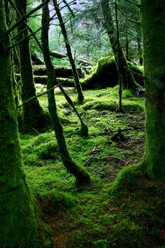 Mossy Glen near Loch Awe, Scotland Submitted to PhotoExtract's photography gallery by Rowland Williams.