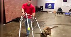 German Shepherd Adorably Fails Service Dog Test But Becomes Internet Sensation Service Dog Training, Service Dogs, Dog Test, Teacup Puppies For Sale, Dog Fails, New Funny Videos, Guide Dog, Happy Dogs, Helping People