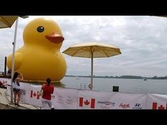 Toronto GIANT RUBBER DUCK in Toronto Downtown WATERFRONT - Cost $120,00 ...