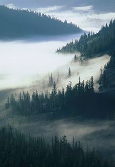valley fog - A May morning near White Pass in the Washington Cascades (by Intrepid Tripod)