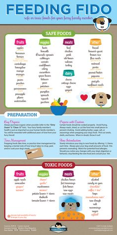 Feeding Fido - safe foods and toxic foods