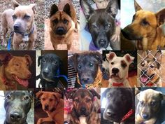 Clayton doggies need vetting, boarding & transport | Pet Expenses - YouCaring.com  Please help them raise the money to save these beautiful animals!