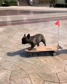 Cute Funny Dogs, Cute Funny Animals, Cute Cats, Funny Looking Animals, Animal Antics, Animal Jokes, Cute Animal Videos, Funny Animal Pictures, Funny Dog Videos
