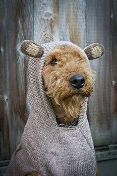 Tänk som folk kan spöka ut sina stackars husdjur...!