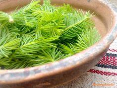 Naspolyakonyha: Fenyőszirup Herbs, Food, Meal, Essen, Herb, Hoods, Meals, Eten
