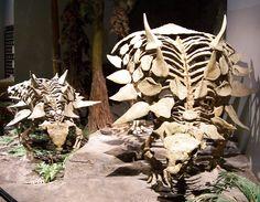 Squelettes de Gastonia, Musée de la vie antique de l'Amérique du Nord. Auteur : Zach Tirrell. 2005
