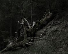 New post on nicchessa Past Life, Dark Wood, How To Remove, Waves, Clouds, Forests, Dark Hardwood, Woods