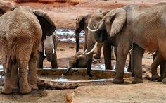 Kenya: un safari di emozioni