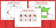 Ladybird Life Cycle Worksheets - Ladybird, life cycle, Minibeasts, worksheet, activity, knowledge and understanding of the world, investigation, living things, snail, bee, ladybird, butterfly, spider