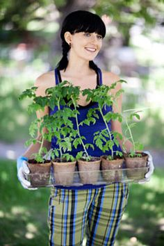Steps to Planting Tomatoes #vegetable #gardening