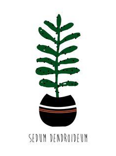 Kit Placas Decorativas Cactus II - AdsiveShop Adesivos Decorativos de Parede