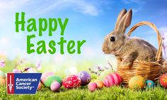 Happy Easter, Easter Bunny, Easter Sale, Clean Dryer Vent, Vent Cleaning, Magical Creatures, New Years Eve Party, Party Games, As You Like