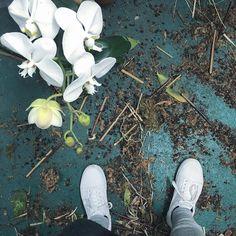 #plants #plantlife #flowerdistrict  #nyc #nylife #vans #oldschool by satie_san
