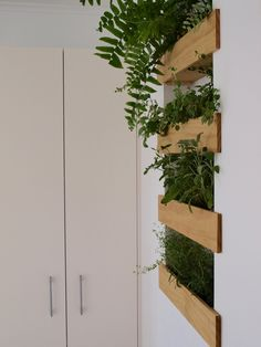 Pearson and Projects - Kitchen PLants.jpg
