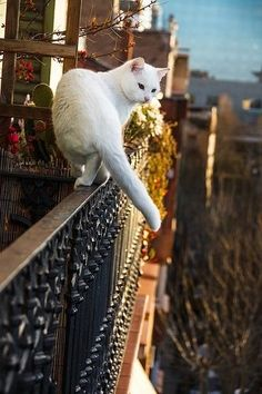 on the balcony Living the High Life ~ White Cat on a Balcony .Living the High Life ~ White Cat on a Balcony . Pretty Cats, Beautiful Cats, Animals Beautiful, Cute Animals, Gatos Cats, Tier Fotos, White Cats, Black Cats, Cat Boarding