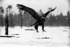 6-1971-Kotka-laskeutuu-Hannu-Hautala.jpg (5597×3740)