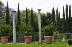 Citrus in pots, columns to echo the Italian Cypress Mediterranean Plants, Mediterranean Style, Citrus Garden, Dig Gardens, Pattern And Decoration, Backyard Projects, Drought Tolerant, Italian Style, Architecture Design