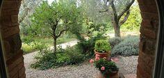 Um vinhedo na Toscana - Vinícola Mate - Italiana Blog