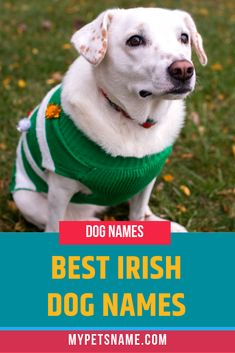 If you've been to Ireland, maybe you fell in love with the Irish setter and its silky red coat?Perhaps you are thinking about a hot bowl of Colcannon or a pint of Guinness. Choose from our picks of the best Irish dog names for some great names. Cool Pet Names, Small Dog Names, Boy Dog Names, Puppy Names, Small Dogs, Labrador Names, Irish Names, Famous Dogs, The Perfect Dog