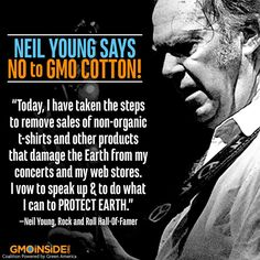 "Rock and Roll Hall-of-Famer, Neil Young, Takes Aim at One of the ""Dirtiest"" GMOs. Asks His Fans to Boycott! More here: http://eatlocalgrown.com/article/13349-rock-and-roll-hall-of-famer-anti-gmo.html?c=tca #GMOs #righttoknow #cotton #music"