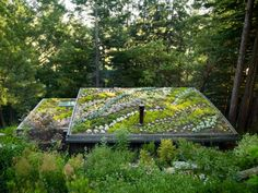 """""""Green roof"""" planted with succulents, could be used in any area you need low water use and low-growing plants"""