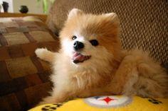 Perro Lulu de Pomerania