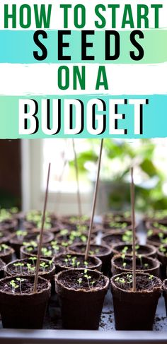 Seed starting on a budget is easy. You don't need fancy equipment or expensive seed starting pots. All you need is a bit of creativity and you can start seeds on a budget. Organic Mulch, Organic Gardening, Gardening Tips, Vegetable Gardening, Veggie Gardens, Growing Veggies, Growing Tomatoes, Starting A Garden, Seed Starting