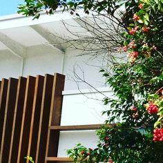 Just love the laid back vibe of this beach house with the contrasting red flowering tree and the wooden uprights. Flowering Trees, Beach House, Interior Design, Architecture, Plants, Red, Beach Homes, Nest Design, Arquitetura