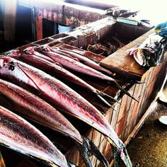 INK361 - Photo - One of our first stops has to be Oistins Fish Market for a nice 7lb Dolphin!
