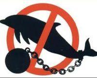 Boycott Sea World Parks. http://www.thepetitionsite.com/934/259/298/boycott-sea-world-parks/