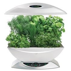 The Aerogarden is an indoor hydroponic garden! Looks very space age.