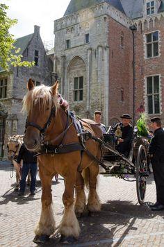 Abdijplein, Middelburg, Zeeland.