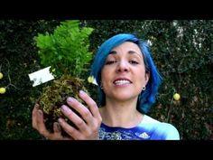 RECETA mágica para plantitas milagrosas (COQUEDAMAS) - YouTube