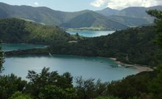 After our lovely peaceful morning at Cowshed Bay and Portage we headed back up the short road to Torea Saddle. This is the saddle with and road to Torea Bay on Queen Charlotte Sound which is a shor… New Zealand, Charlotte, Track, Hiking, River, Queen, Awesome, Outdoor, Walks