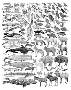100 Species of Cascadia